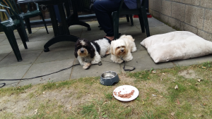 lommerbergen hondjes
